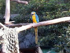 Oakland Zoo - Parrot