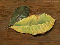 Still life oil painting of green magnolia leaves with cedar wood grain by Ester Wilson - http://www.esterwilson.com
