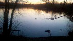 sunset-swan1.jpg (782×439)