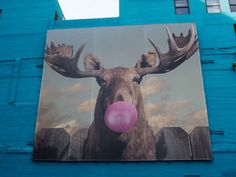 🍬🍬🍬 Urban Landscape, Corridor, Moose Art, Bubble, Street Art, Chicago, City Landscape, Urban Art