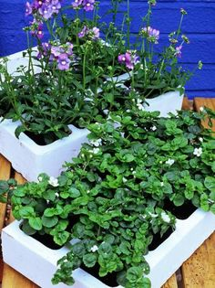 Tender Summer Bedding Plants Ready to Plant