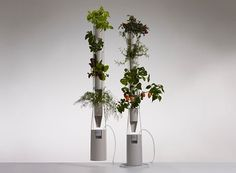 Short on space but still want to grow your own greens? Not a problem. A Windowfarm utilizes vertical window space for year-round growing. A hydroponic system allows maximum yield; nutrient-spiked water is pumped from a reservoir down through each bottle to bathe the roots of the plants, giving them adequate food and water on a set schedule.