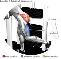 GLUTES -  GLUTEUS MACHINE