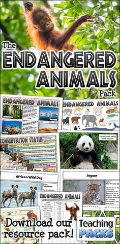 Great Pic Endangered Species preschool Tips You know the way very much I adore wildlife. I've visited everywhere to hook any glimpse of dogs inside wild —. Extinct Animals, Rare Animals, Strange Animals, Animal Dictionary, Dog Status, Animals Information, African Wild Dog, Animal Activities, Animal Posters