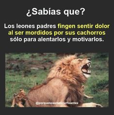Sígueme como GSánchez. Cat Facts, True Facts, Weird Facts, Pretty Animals, Cute Animals, Curious Facts, Spanish Memes, Can't Stop Laughing, Funny Me