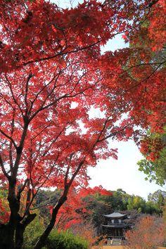 勧修寺の素晴らしい紅葉と秋の情景