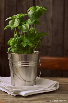 Basil's used for fatigue and a memory booster. Health And Beauty, Health And Wellness, Health Tips, Healthy Foods To Eat, Healthy Recipes, Beauty Table, Kitchen Herbs, Spices And Herbs, Pesto Dip