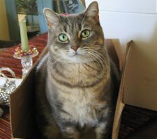 The cat looks just like my aunts cat gracie,