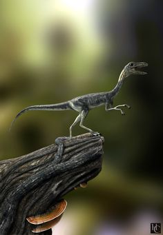 Compsognathus by Hugo Costa 900px X 1301px