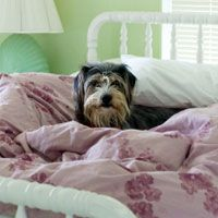 Should You Allow Your Dog in Your Bed?