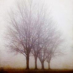 Fine Art Photography Blog of Irene Suchocki: My Life in the Bush of Ghosts