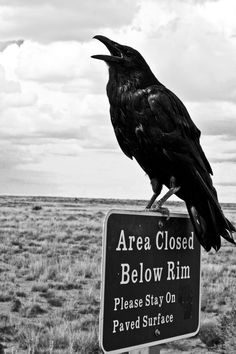 crow, uncredited
