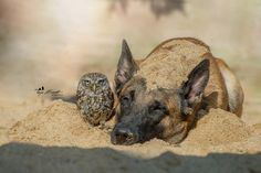 Sand by Tanja Brandt on 500px