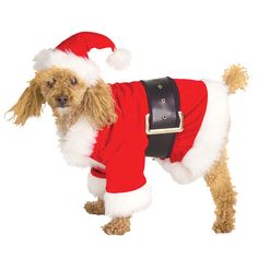 It might as well be Christmas! Your Poodle will love being Santa for Halloween this year.