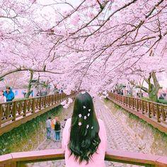 Korean Girl Photo, Cute Korean Girl, Cute Girl Wallpaper, Colorful Wallpaper, Black Wallpaper, Spring Photography, Girl Photography Poses, Aesthetic Photo, Pink Aesthetic