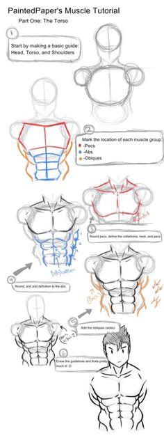 Anatomy Drawing Tutorial Big Muscles Tutorial - Part 1 by paintedpaper on DeviantArt - Male Figure Drawing, Body Reference Drawing, Human Drawing, Guy Drawing, Anatomy Reference, Art Reference Poses, Drawing Tips, Drawing Muscles, Drawing Ideas