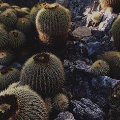 #JardinExotique Cactus  . #followme #like4like #instadaily #instasize #instagram #cactus #vscocam #vsco by pixely06 from #Montecarlo #Monaco