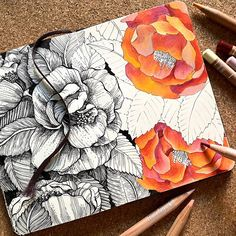 """Alice on Instagram: """"▫️Camellia▫️ . Work in progress: It's a long process, or I'm slow. Both are true 🤗 . I'm so curious to see it finished! . .  Slide to see…"""" Creative Journal, Creative Art, Best Sketchbook, Floral Drawing, Flower Sketches, Bullet Journal Inspiration, Art Journal Pages, Art Club, Botanical Art"""