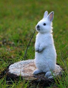 """A Bunny Rabbit:  """"I smell carrots cooking, somewhere over there!"""""""