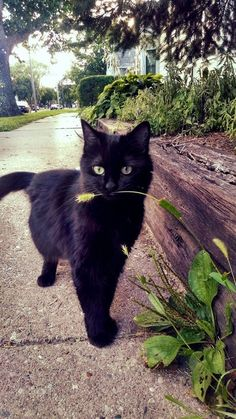 sweet black kitty