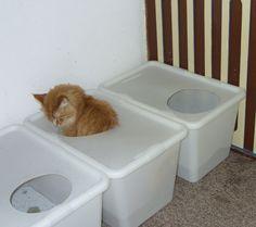 .. auch ne Idee , günstiger Modkat !!! - Seite 4 - Katzen Forum