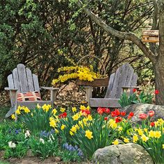 Pools of yellow 'King Alfred' daffodils, 'Red Apeldoorn' tulips, grape hyacinths and white hyacinths ramble among boulders in this woodland garden  Plant large bulbs in groups of 5 to 15 bulbs of each type. Small bulbs  are most effective in groupings of 15 to 25.