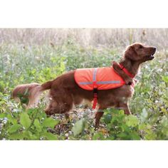 $24.44-$21.95 Reflective Vest for Dogs - Large - Lightweight, unlined, stylish yet functional. High quality vests are colorful during the day and glow brightly at night making your dog easy to see. Adjustable snaps at neck and belly. Extra safety feature to attach the vest to the collar to keep vest in place. Designed to extend up to 3/4 of the dog's back. Highly visible in bright orange. Reflect ...
