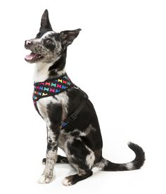 FuzzYard Jelly Bones Dog Harness