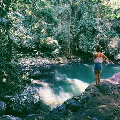 springbrook national park x