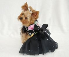 Celebrate Harness Dog Dress by KOCouture on Etsy  pet clothes, pet fashion, yorkie, puppy, cute dog, canine, couture dress, kocouture