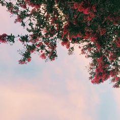 Imagem de flowers, pastel, and photography