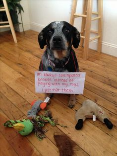 Dog shaming- this could totally be my dog Molly. ♡