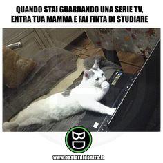 Condividi le risate, tagga i tuoi amici! #serietelevisive #serietv #studiare #studio #compiti #gatto #gatti #bastardidentro