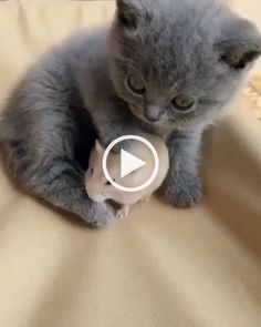 Friendship cat and mouse. friendship cat and mouse cats with big eyes Happy Animals, Animals And Pets, Funny Animals, Cute Animals, I Love Cats, Cute Cats, Funny Cats, Hamster Gif, Baby Cats