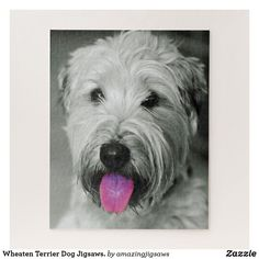 Wheaten Terrier Dog Jigsaws. Jigsaw Puzzle