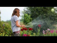 Groene aanslag op tegels in de tuin of op het terras? Wij leggen je uit wat je kunt doen om dit probleem definitief op te lossen! Wat moet je doen wanneer er sprake is van groene aanslag of mosvorming op tegels?