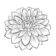 Illustration about Beautiful monochrome, black and white seamless background with flowers dahlia. Hand-drawn contour lines and strokes. Illustration of line, dahlia, color - 42987055 Dahlia Flower Tattoos, Aster Flower, Tattoo Flowers, Drawing Flowers, Flower Drawings, Flower Tattoo Stencils, Dahlia Flowers, Flower Sketches, Glass Flowers