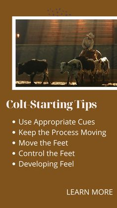 Check out these colt-starting tips! Barrel Racing Exercises, American Quarter Horse, Horse Quotes, Ranch Life, Horse Training, Show Horses, Horse Stuff, Drills, Horseback Riding