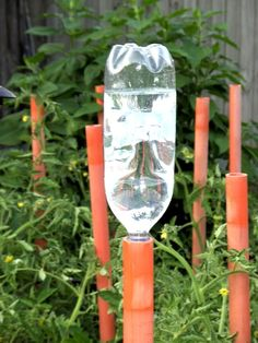 Image detail for -water bottle drip system just letting you know i have a patent pending . Garden Irrigation System, Aquaponics System, Vege Garden Design, Garden Tools, Garden Watering System, Drip System, Goat Farming, Water Conservation, Water Garden