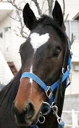 Horse with a heart