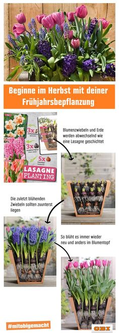 Mit der Lasagnen-Technik pflanzt du wie ein Profi im Her… Lasagna without cheese. With the lasagne technique you plant your spring flowers like a pro in autumn. For more garden and balcony hacks just stop by. Garden Types, Herb Garden Design, Backyard Garden Design, Container Gardening, Gardening Tips, Garden Plants Vegetable, Balcony Plants, Garden Images, Hacks