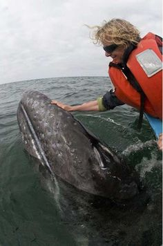 The most friendly whales in the world