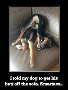 I told my dog to get his butt off the sofa - http://funnypicturequotes.com/i-told-my-dog-to-get-his-butt-off-the-sofa/