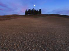 Cypress Trees, Val d'Orcia, Siena, #Tuscany, #Italy