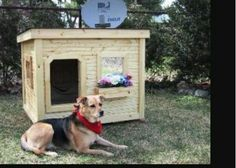 Pet House Idea