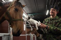 So cute! This puppy and horse smooch, snout-to-teeth  (Photo credit: Oli Scarff / Getty Images)