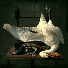 Amazing white swan art by Darwin, Sinke & van Tongeren