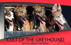 Cult of the Greyhound. <3