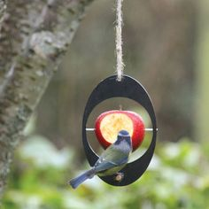 冬の庭を楽しむ方法#homify #ホーミファイ #ガーデニング #冬 https://www.homify.jp/ideabooks/378617 ashortwalk の アクセサリー&デコレーション Eco Bird Feeder
