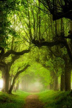 Wald 58 by HeikoGerlicher